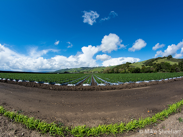 agricultural fields by mike sheehan